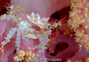 well defended for coral polyps by Oscar Miralpeix